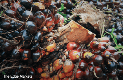 Malaysia's Sept palm oil inventory seen higher - CIMB