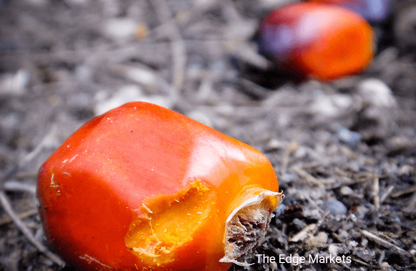 Malaysian Aug palm oil inventory, output higher than expected
