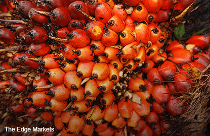 Palm oil gains, buoyed by expectations of positive data