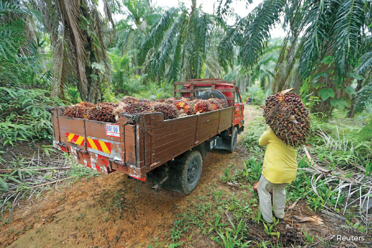 A worker carrying palm fruits at a local oil palm plantation. The MPOA and MEOA say it is difficult to stop workers from leaving due to the MCO. (Photo by Reuters)