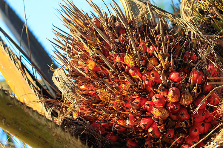 Palm oil may rise to RM2,001
