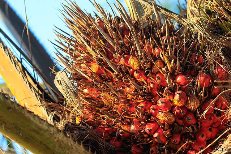 Malaysia Dec palm oil stockpiles seen falling 8.5%