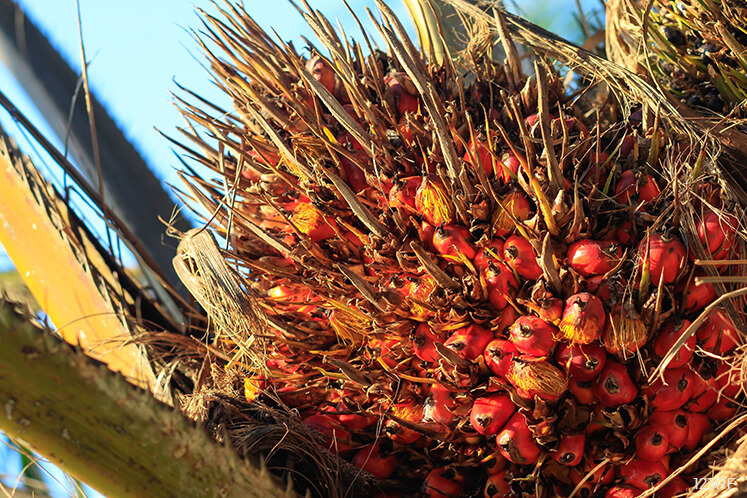 Palm oil edges up in early trade