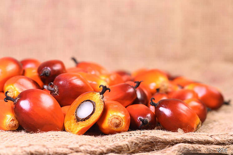 Palm oil rises over 1% in early trade