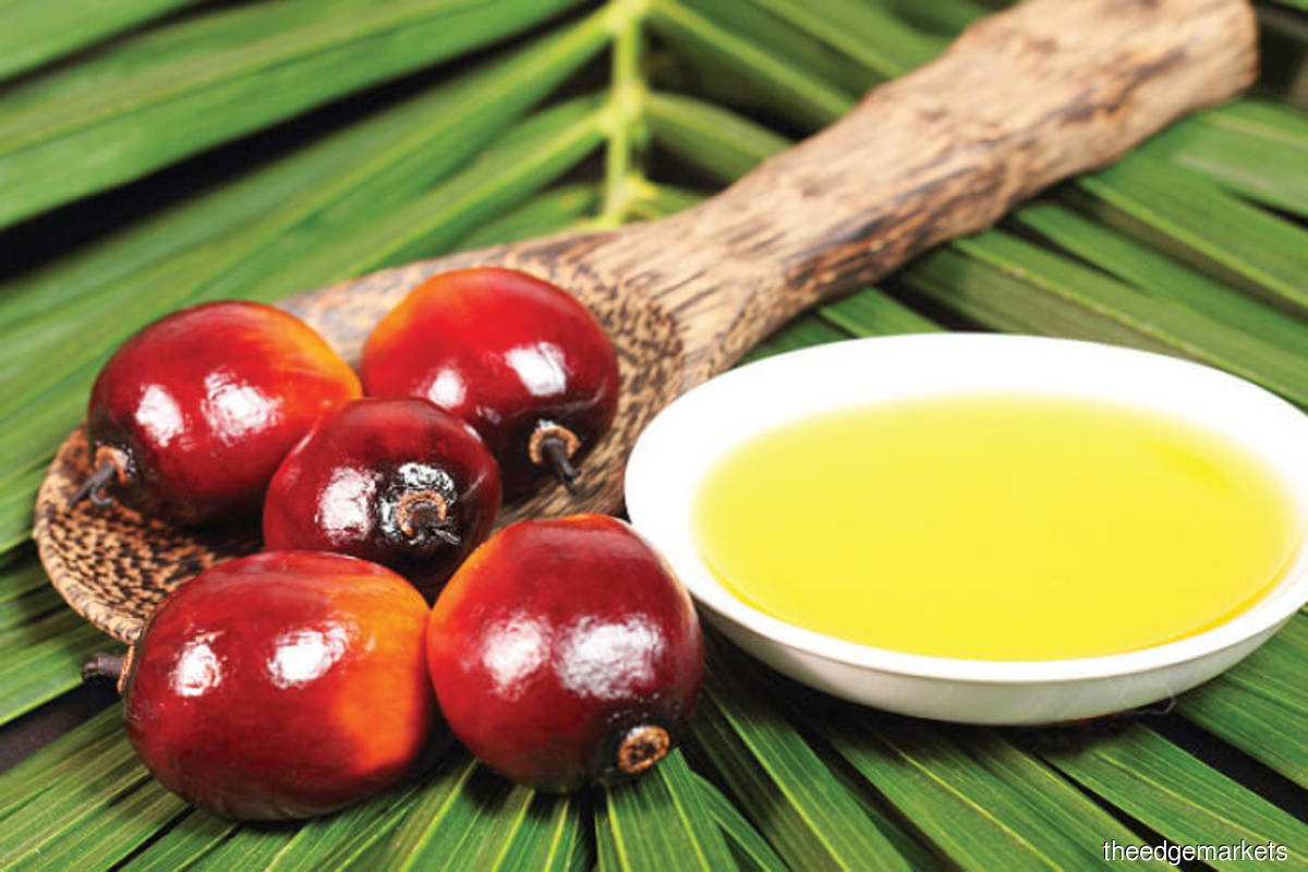 Malaysia end-Feb palm oil stocks seen up 7% as output recovers