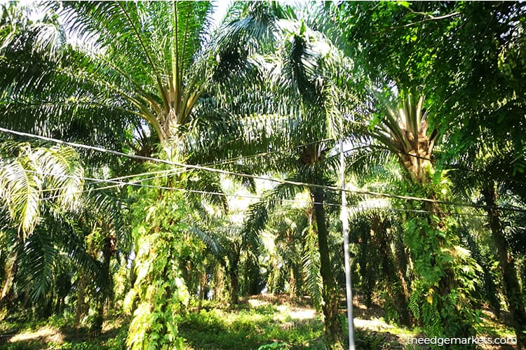 Felda-FGV land lease agreement generates 50% less income than expected