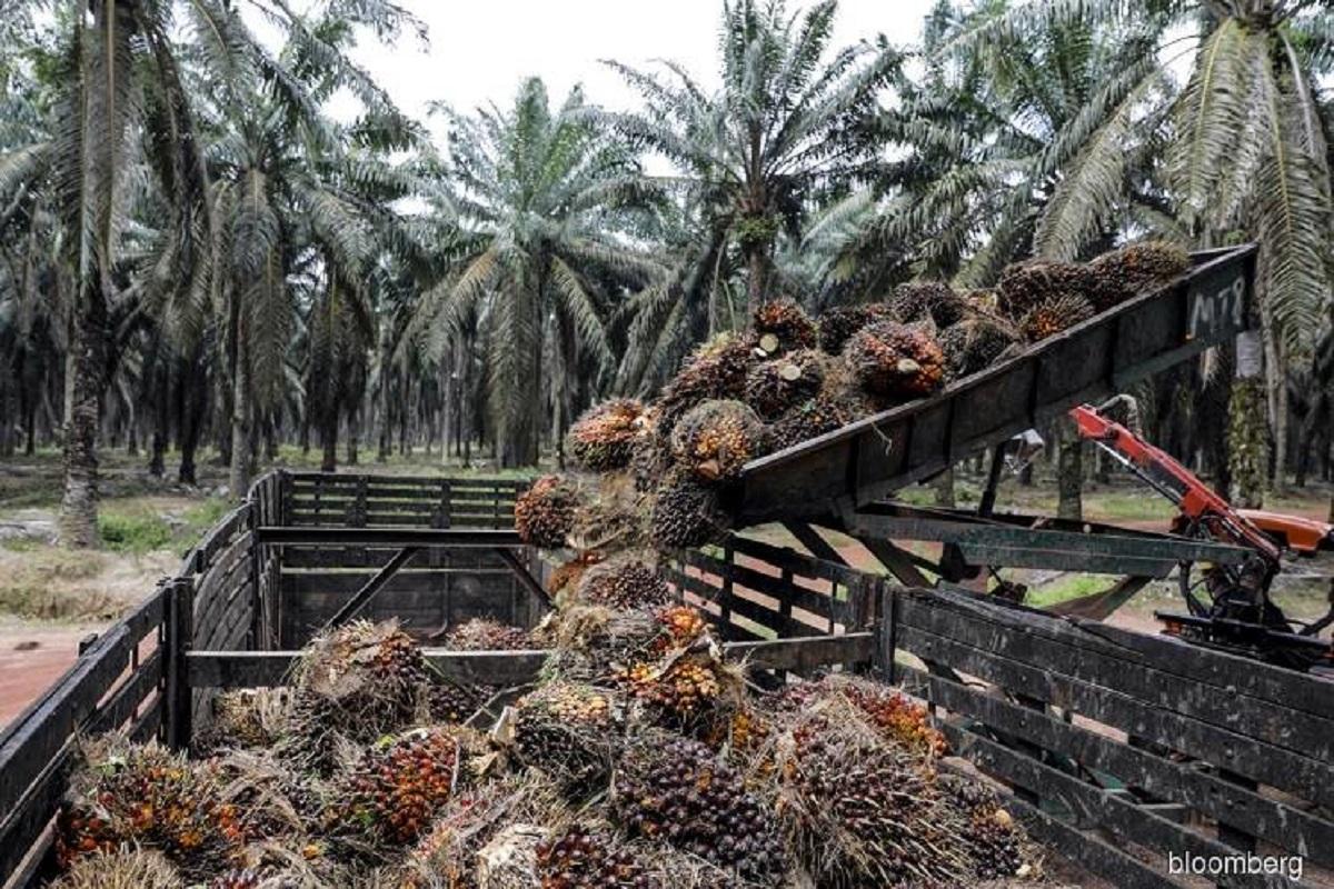 UOB Kay Hian raises CPO price forecast for 2021 to RM3,000 per tonne