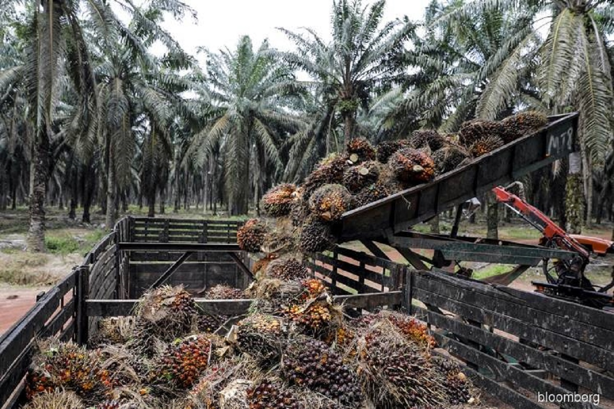 Malaysian palm oil stocks may have fallen 8% m-o-m to 1.59 million tonnes at end-October, says CGS-CIMB