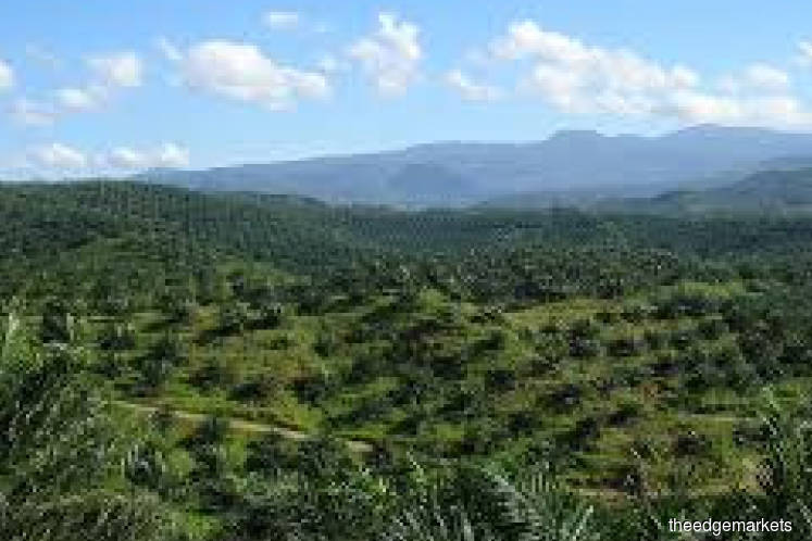 Timely repair of India-M'sia relations good for palm oil
