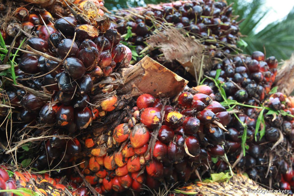 No respite for palm oil players despite high CPO price