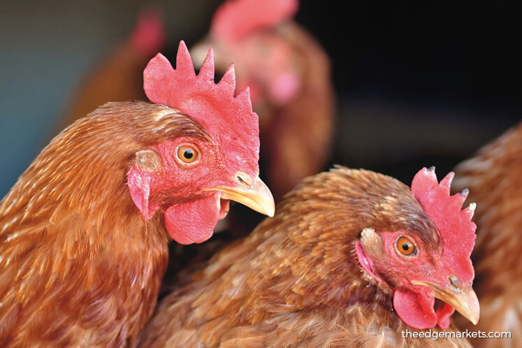 Poultry firms count on nuggets and sausages to feed sales growth