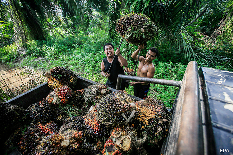 Plantation owners call for fee review in Sabah's exercise to regularise foreign workers