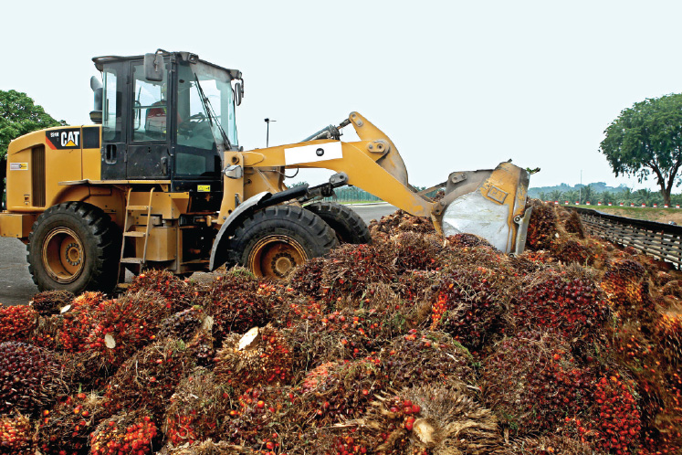 More palm oil output recovery seen in coming months