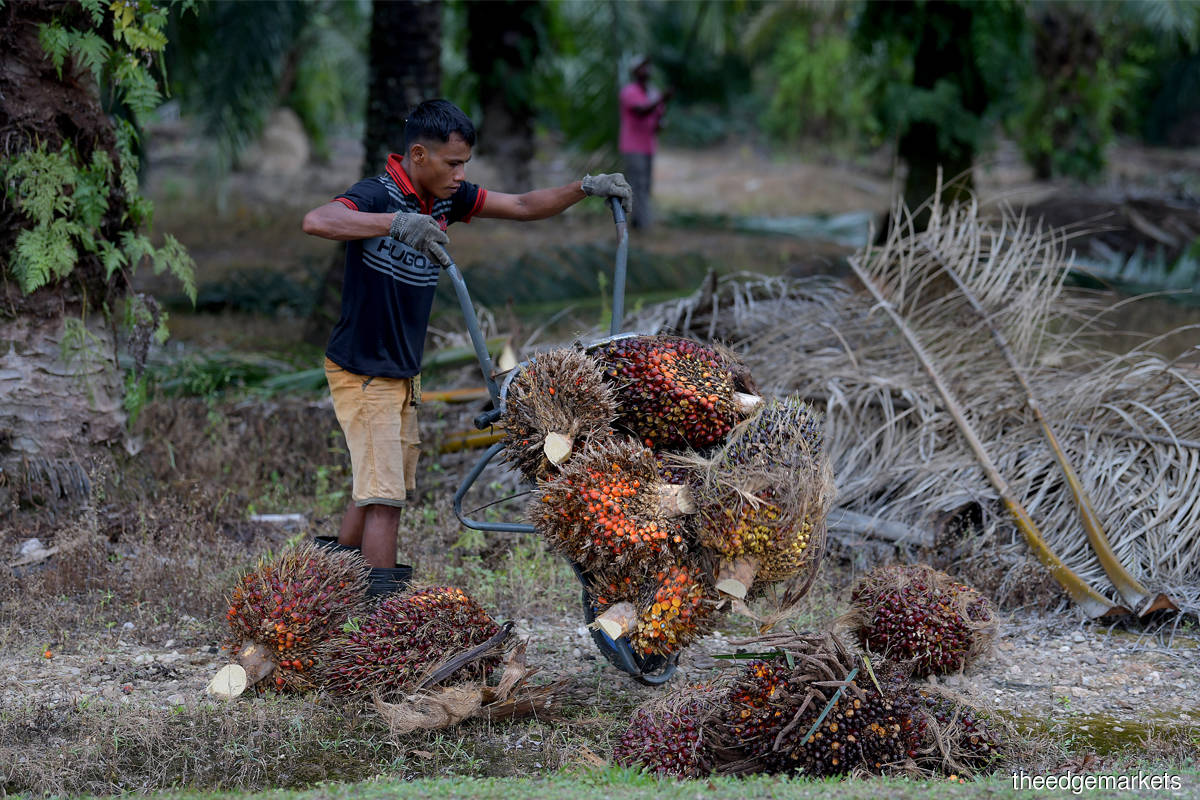 Special Report On the 12th Malaysia Plan 2021 - 2025: Industries insist a lot more time needed to adjust to 15% foreign labour cap