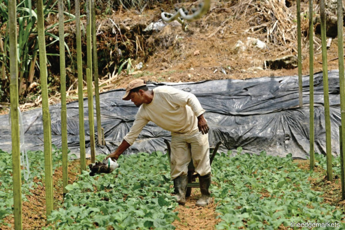 Change regulations to allow more private sector involvement in agriculture industry, experts urge