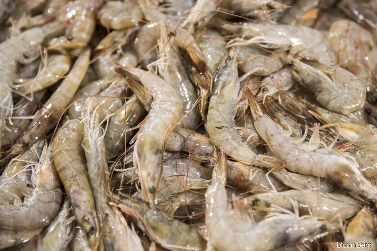 China suspends imports from Ecuadorian firm after Covid-19 found on seafood packaging
