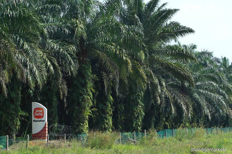 Sime Darby Plantation goes deeper downstream