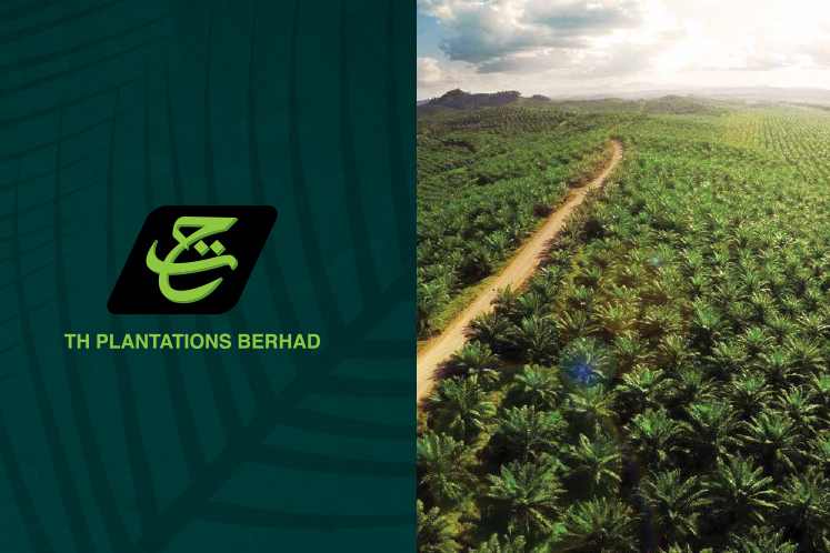 TH Plantations halves net loss to RM227m in FY19