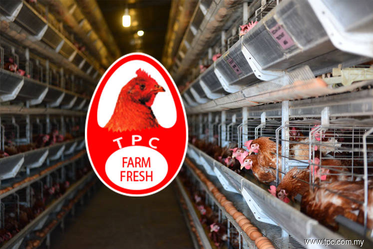 TPC Plus to be charged for hiking markup on Grade A eggs by nearly 30%