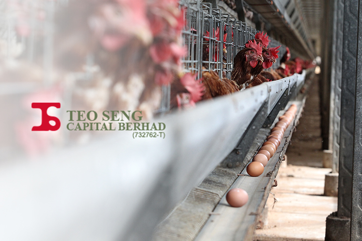 Teo Seng's 2Q profit down 37% on higher feed costs, lower egg sales
