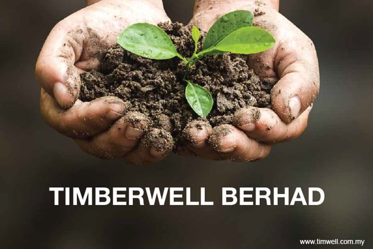 Timberwell share price hits limit up, all-time high