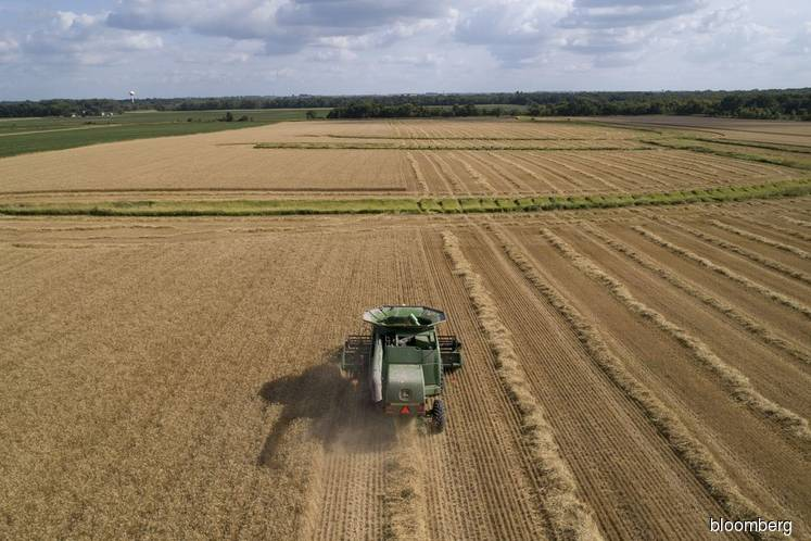 U.S. soybean supply to fall as Chinese purchases rise — government