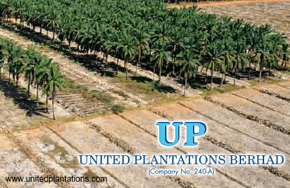 PNB emerges as substantial shareholder in United Plantations