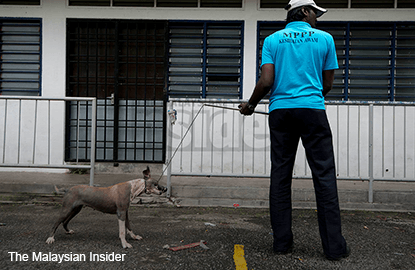 Animal lovers dog Penang CM in Ipoh to protest against culling strays