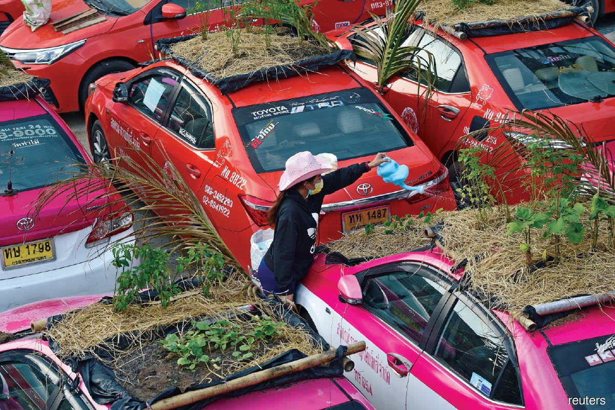 An employee watering vegetables on unused taxis parked at Ratchaphruek Taxi Cooperative in Bangkok, Thailand. Bangkok's taxis have become vegetable gardens in the ongoing economic crisis.