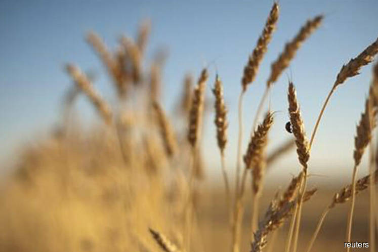 Dry conditions to curb Australia's wheat crop for 3rd yr — weather forecaster