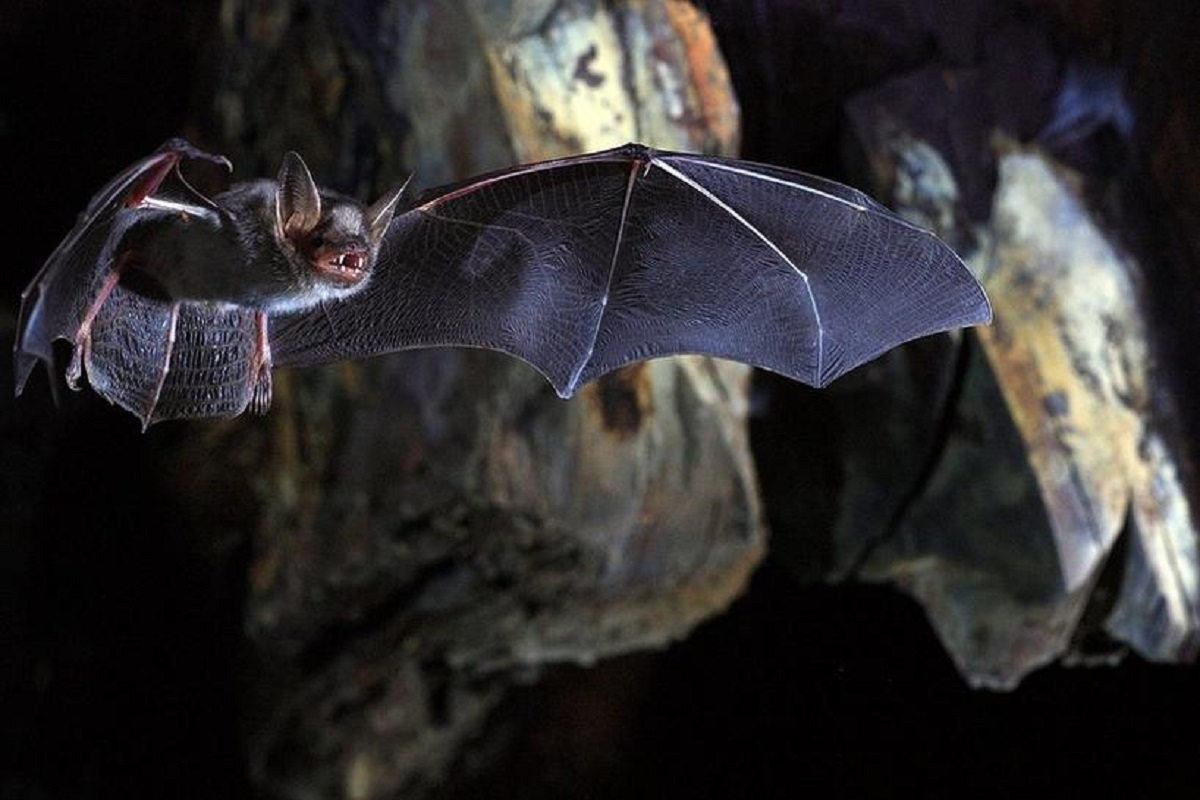 Scientists discovered small outbreaks of the virus in Bangladesh and India, with fruit contaminated with bat saliva or urine the most likely culprit.