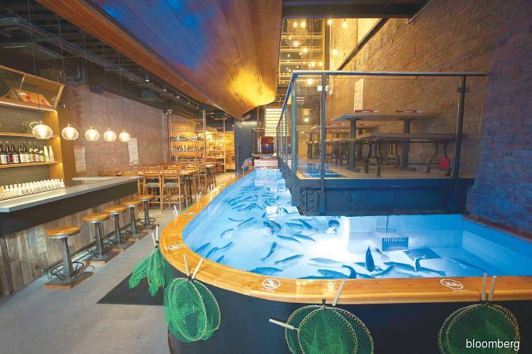 Fishing for your seafood at New York's Zauo