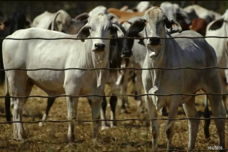 Smuggled livestock cause spread in FMD — Quaza