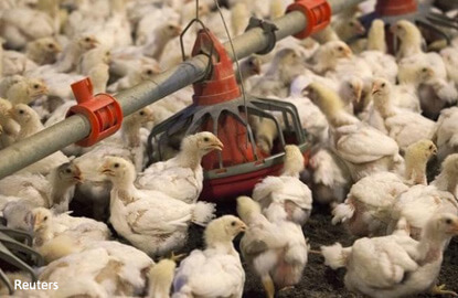 S.Korea bans U.S. poultry imports over bird flu scare