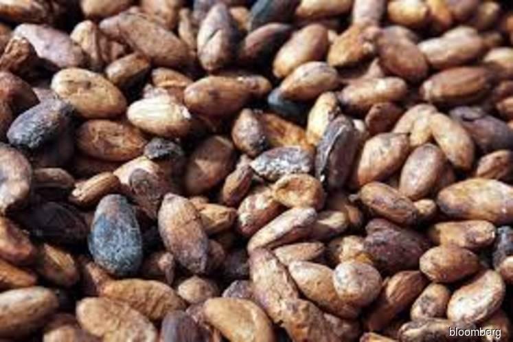 Top cocoa growers halt 2020 sales amid price talks
