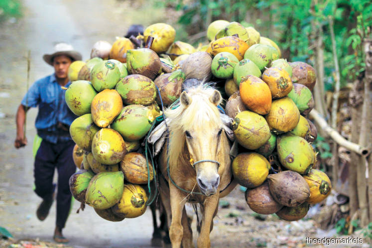 Agriculture: A coconut revival