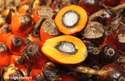 Palm oil to fall more to RM2,750