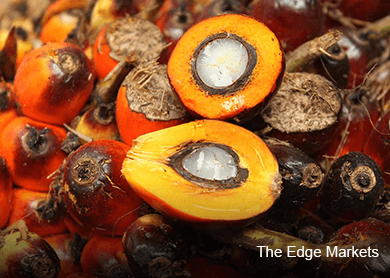 Malaysian Nov palm oil inventory at record high
