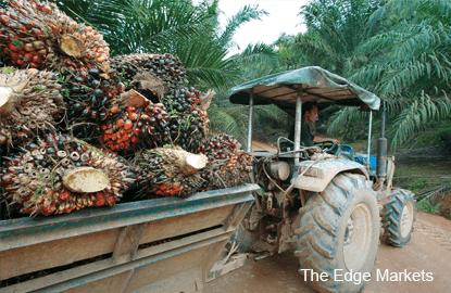 crude_palm_oil_theedgemarkets
