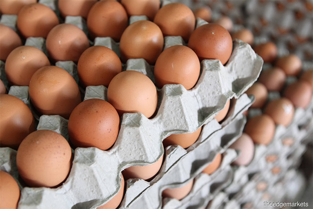 Govt not in hurry to resume exporting eggs to Singapore, says Nanta