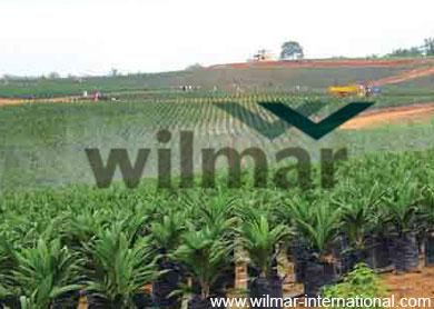 wilmar_theedgemarkets