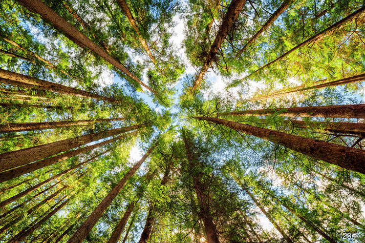 Framework on forestry policy expected to be finalised by next year