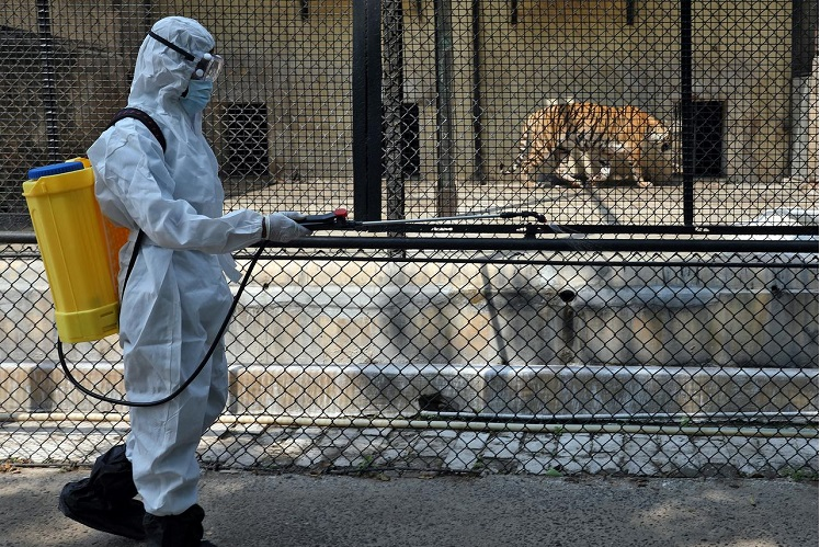 A man in a protective suit sprays disinfectant in a tiger enclosure at Alipore zoo amid concerns about the spread of Covid-19, in Kolkata, India, April 7, 2020. (Photo by Reuters)