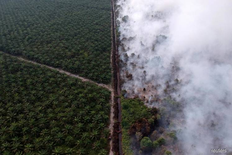 Indonesia blames Malaysian companies for some forest fires