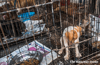 Dogs, cats rain on animal shelter as canines are culled
