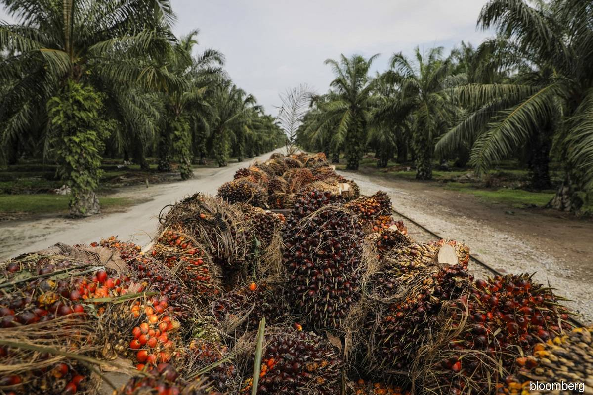 Indian and Chinese demand for palm oil likely to rise in 2021