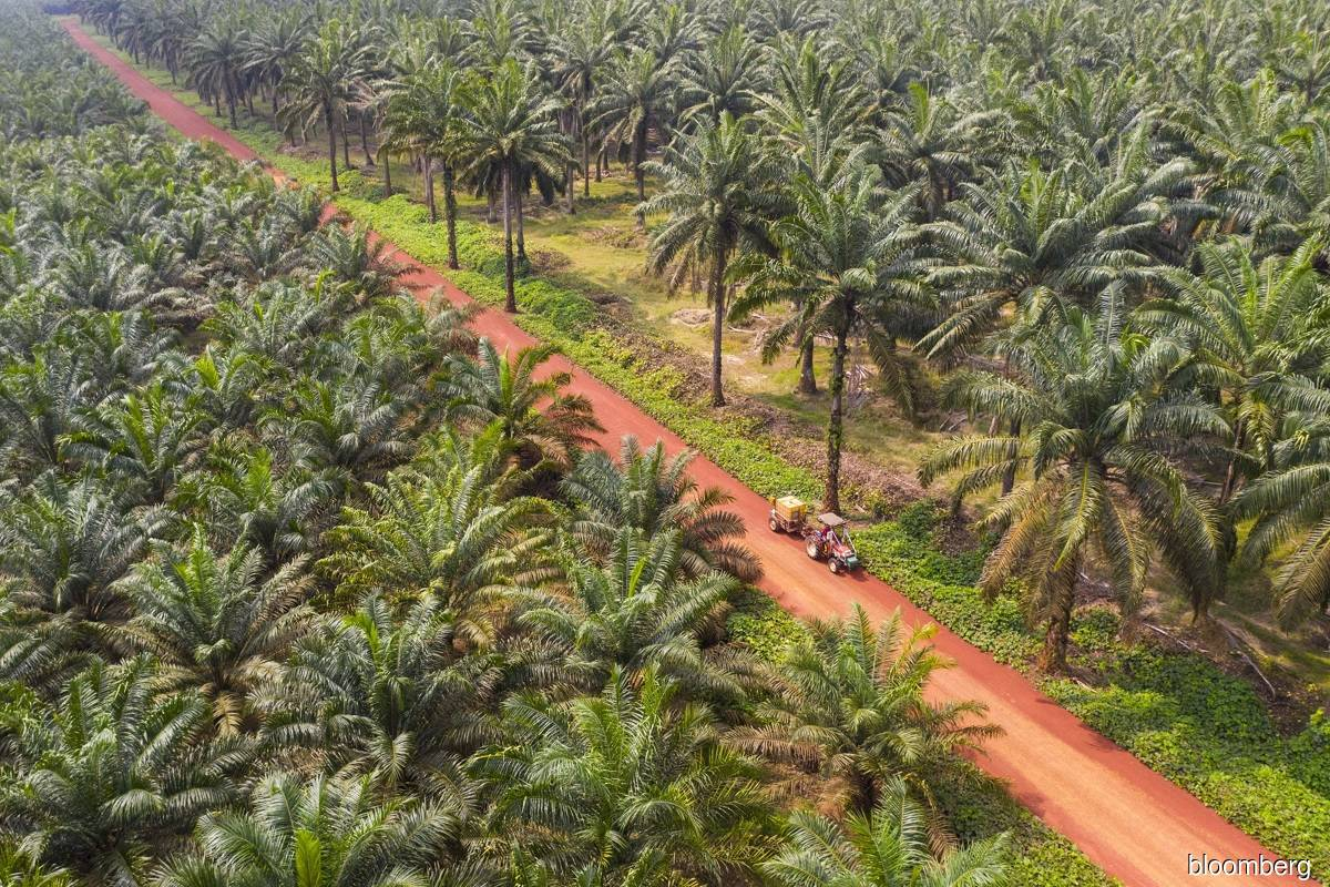 MEOA appeals to Sabah to review new SOPs for palm oil ops
