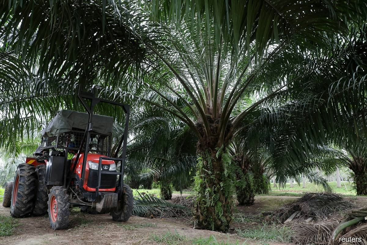 Higher palm oil prices seen if La Niña extends into first half of next year