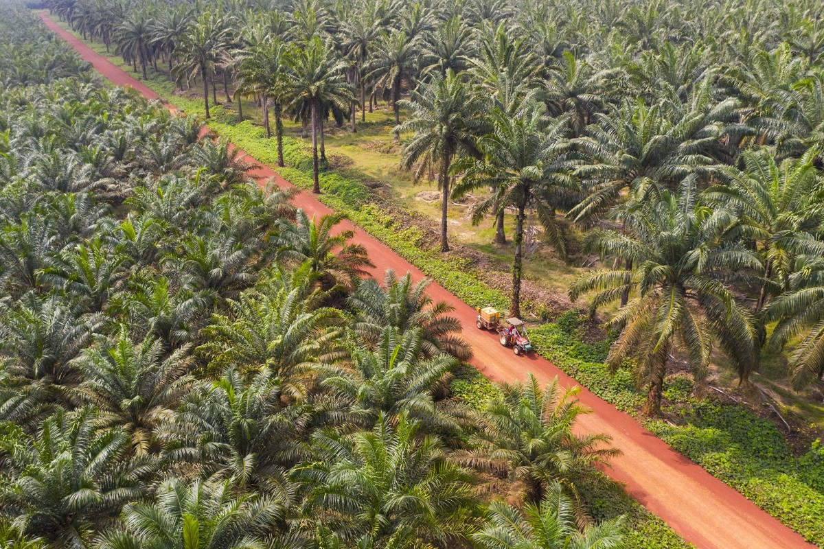oil palm plantation investment in malaysia