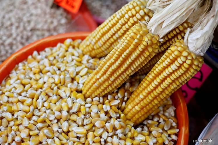 Corn slumps as ethanol makers feel coronavirus constraints